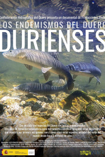 Durienses Poster Web